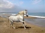 cheval:plage.jpg