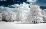 neige-arbre.jpg