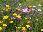 fleurs-du-jardin.jpg