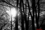 lumiere-et-arbre-n-b.jpg