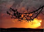 branche:coucher.soleil.jpg