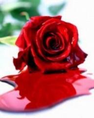 rose.sang.jpg