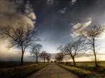 route.arbres.jpg