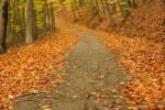 feuilles mortes .jpg