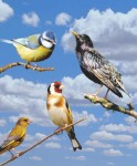oiseaux.jpg