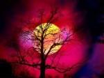 arbre.lune.ciel.rouge.jpg